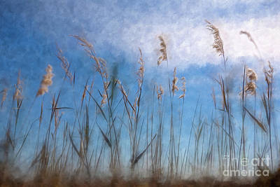 Painting - Sea Oats And Sky On Outer Banks Ap by Dan Carmichael