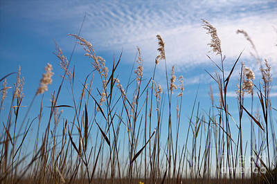 Photograph - Sea Oats And Sky On Outer Banks by Dan Carmichael