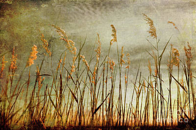 Photograph - Sea Oats And Sky On Outer Banks Fx by Dan Carmichael