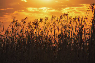 Photograph - Sea Oats And Sun by Allen Biedrzycki
