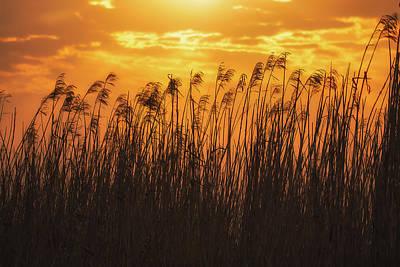 Photograph - Sea Oats And Sun by Allen Biedrzycki