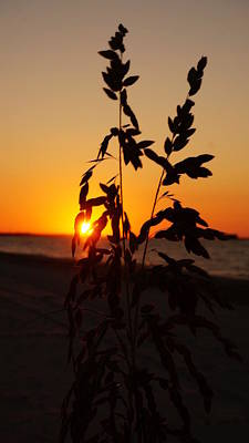 Photograph - Sea Oats At Sunrise by Laurie Pike