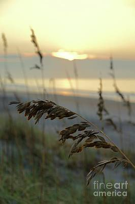 Wall Art - Photograph - Sea Oats At Sunrise by Megan Cohen