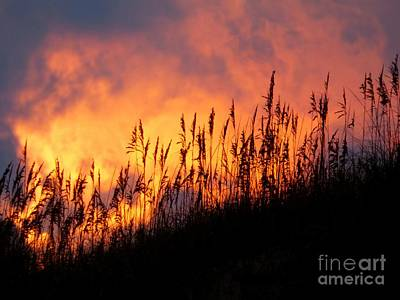 Photograph - Sea Oats At Sunset by Jean Wright