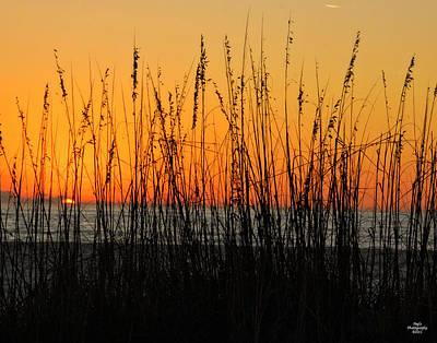 Photograph - Sea Oats At Sunset by Peg Runyan