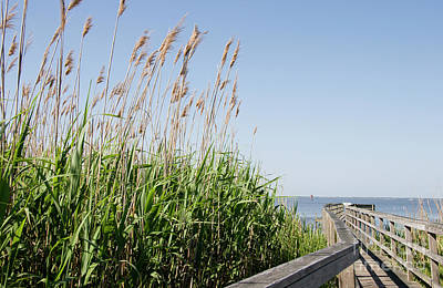 Photograph - Sea Oats By The Boardwalk by Jill Lang