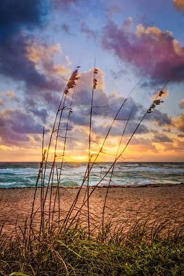 Sea Oats Art Print by Debra and Dave Vanderlaan