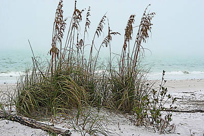 Photograph - Sea Oats In Light Fog by Gene Norris