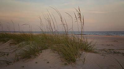 Photograph - Sea Oats In Soft Light by Sally Simon
