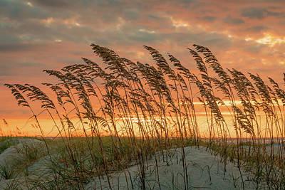 Photograph - Sea Oats by Jody Merritt