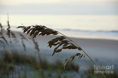 Sea Wall Art - Photograph - Sea Oats by Megan Cohen