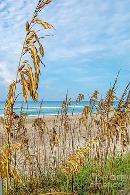 Photograph - Sea Oats by Mim White