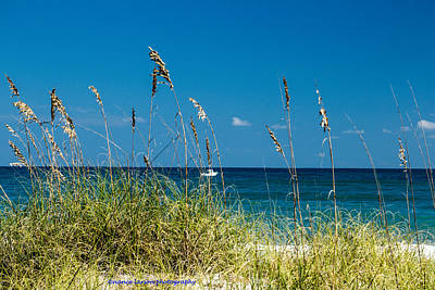 Photograph - Sea Oats by Nance Larson