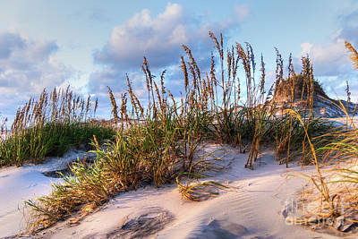 Photograph - Sea Oats On Outer Banks Sand Dunes by Dan Carmichael