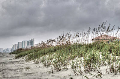 Photograph - Sea Oats by Ree Reid