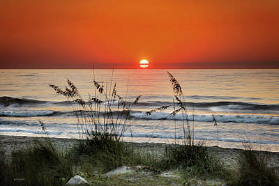 Photograph - Sea Oats Sunrise by Phil Mancuso