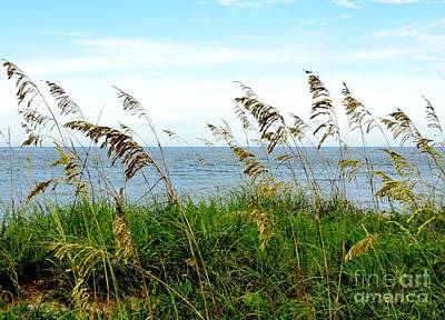 Photograph - Sea Oats by Tim Townsend