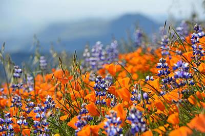 Sea Of California Wildflowers Art Print
