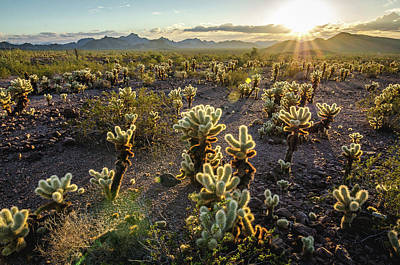 Photograph - Sea Of Cholla by Margaret Pitcher