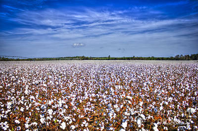 Photograph - Sea Of Cotton South Georgia Cotton Field by Reid Callaway