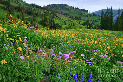 Photograph - Sea Of Flowers by Roxie Crouch