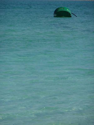 Photograph - Sea Of Green by Esther Newman-Cohen