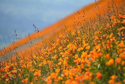 Sea Of Poppies Art Print by Kyle Hanson