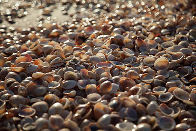 Photograph - Sea Of Shells On The Beach by Yoel Koskas