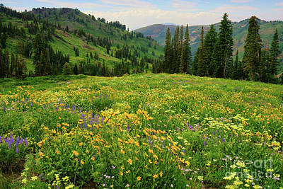 Photograph -  Sea Of Wildflowers by Roxie Crouch
