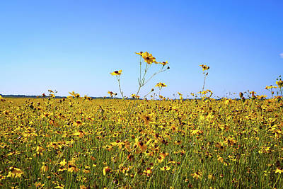 Fields Photograph - Sea Of Yellow by Ric Schafer