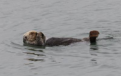 Photograph - Sea Otter - 3  by Christy Pooschke