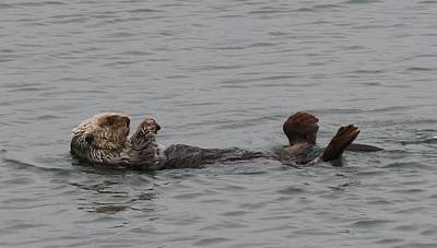 Photograph - Sea Otter - 7 by Christy Pooschke