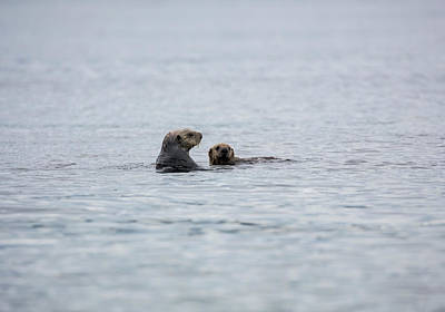 Photograph - Sea Otter And Her Baby by Gloria Anderson