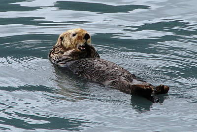 Photograph - Sea Otter by Angie Vogel