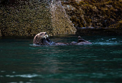 Photograph - Sea Otter by Gloria Anderson