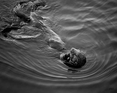 Photograph - Sea Otter IIi Bw by David Gordon