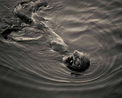 Photograph - Sea Otter IIi Toned by David Gordon