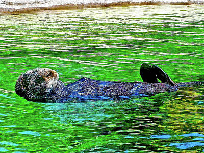 Photograph - Sea Otter In Oregon Coast Aquarium In Newport, Oregon by Ruth Hager
