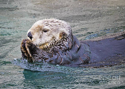 Photograph - Sea Otter In Rain by Chris Dutton