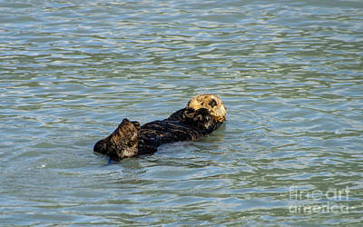 Photograph - Sea Otter by Louise Magno