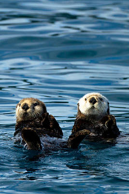 Sea Otter Pair Art Print by Adam Pender