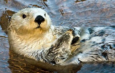 Otter Photograph - Sea Otter Portrait by Jim Chamberlain