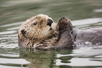 Sea Otter Profile Art Print by Tim Grams