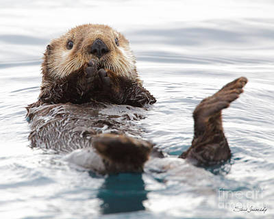 Sea Otter Art Print