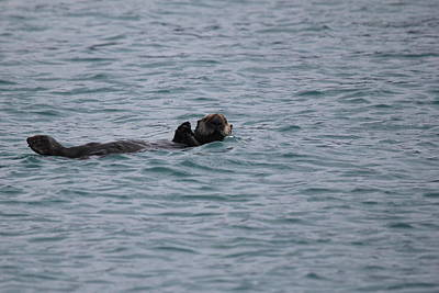 Photograph - Sea Otter by Trent Mallett