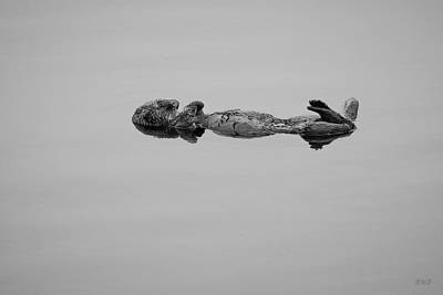Photograph - Sea Otter Vi Bw by David Gordon