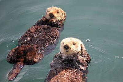 Photograph - Sea Otters by Douglas Miller