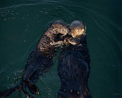 Photograph - Sea Otters II Color by David Gordon