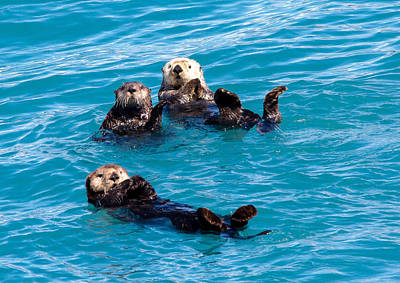 Photograph - Sea Otters by Phil Stone
