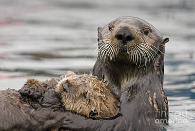 Sea Otters Art Print by Tim Grams